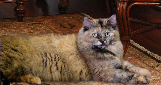 urinary tract infection wet cat food